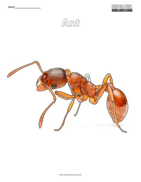 Ant Coloring Page Free